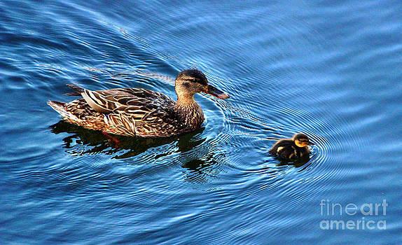 Swimming Lesson  by Judy Palkimas