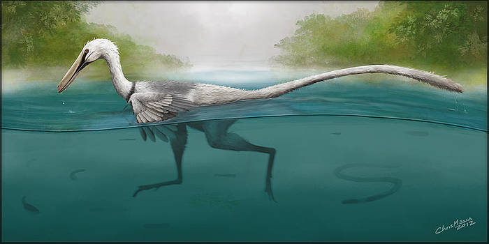 Swimming Raptor by Christian Masnaghetti