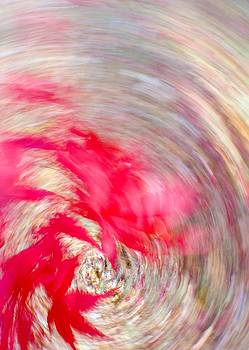 Swirling Japanese Maple Leaves by Bernhart Hochleitner