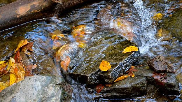 Patricia Twardzik - Swirling Stream of Leaves