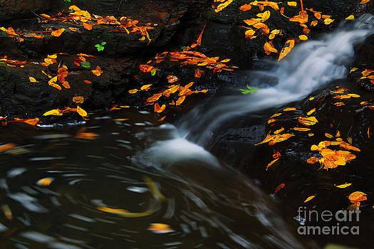Swirls by Melissa Petrey