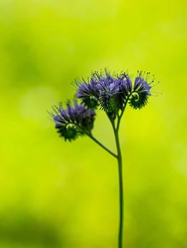 Hakon Soreide - Swirly Flower