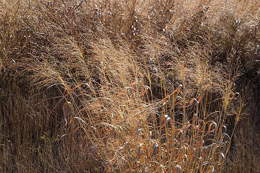 Switchgrass in Autumn by Steven Schwartzman