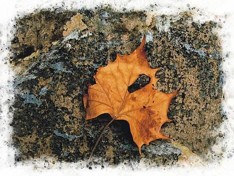 Joe Duket - Sycamore Leaf Study