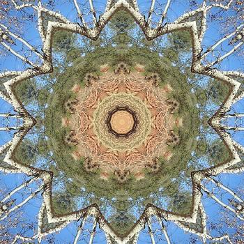 Sycamore Splendor by Trina Stephenson