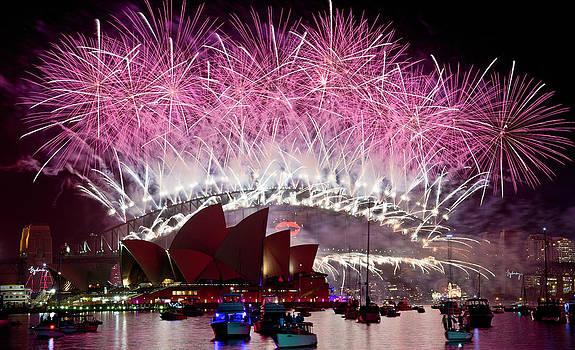 Sydney Fireworks - Pink by Rick Drent