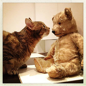 Tabby and Teddy by Louise Morgan
