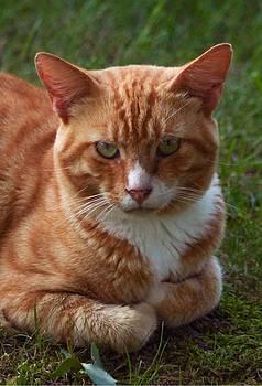 Tabby Cat by Brad Fuller