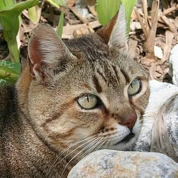 Tracey Harrington-Simpson - Tabby Cat Portrait