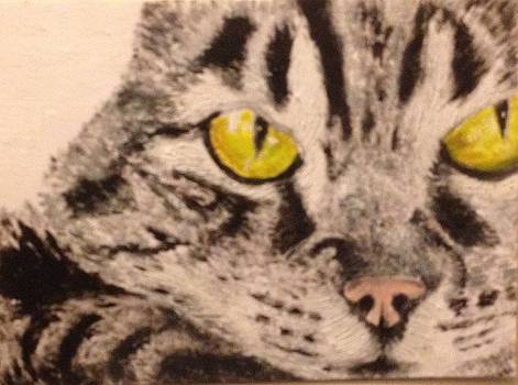 Tabby Close-up by John Schuller