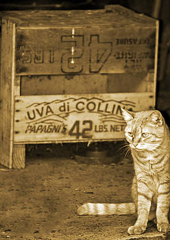 Tina McGinley - Tabby Sentinel in Sepia