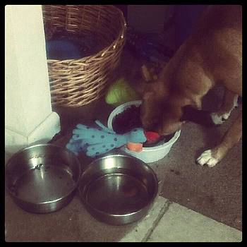 Taboo Likes To Feed His Toys At Dinner by Anne Simon