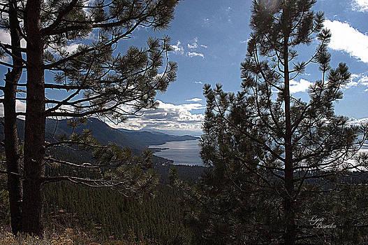 Lynn Bawden - Tahoe Trees