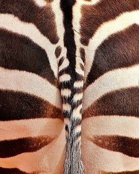 Tailing a Zebra by Diane Alexander