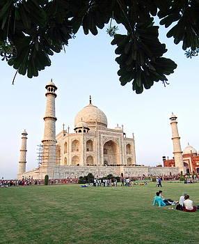 Devinder Sangha - Taj Mahal framed by garden tree