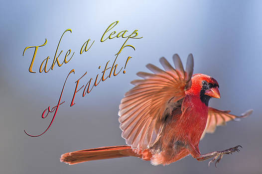 Take a Leap of Faith by Bonnie Barry