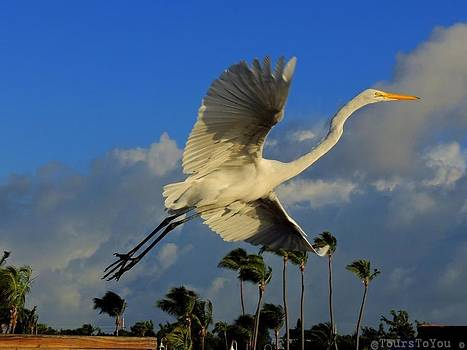 Take Off by Janet Moss