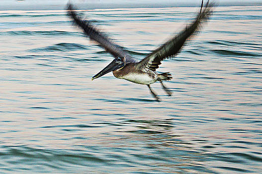 Take Off by Sherry Allen