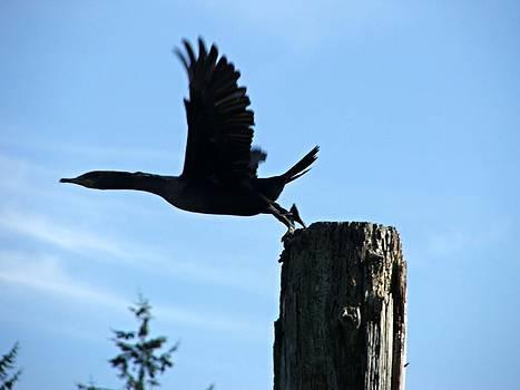 Takeoff by Gary Rathjen