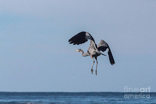 Taking Off by Terry Cotton