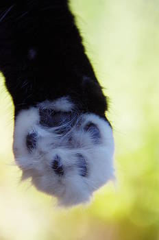 Marilyn Wilson - Talk to the Paw