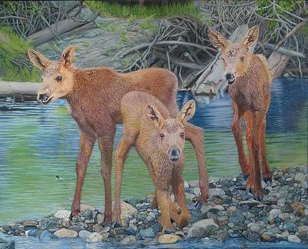 Talkeetna River Trio by Laurie Cartwright