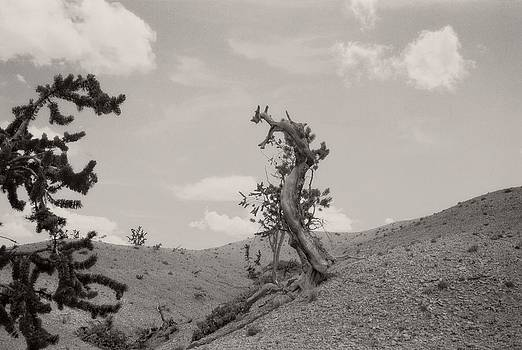 Talking Trees in Bryce Canyon by Carol Whaley Addassi