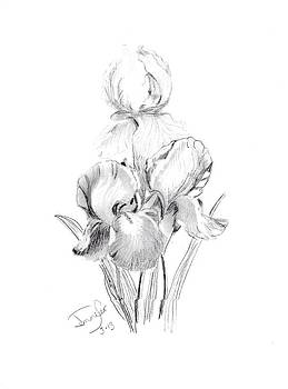 Tall Bearded Iris by Jennifer Ransom