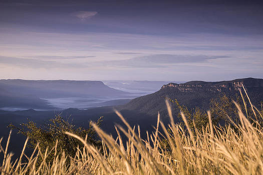 Tall grass in the Blue Mountains by Joe Wigdahl