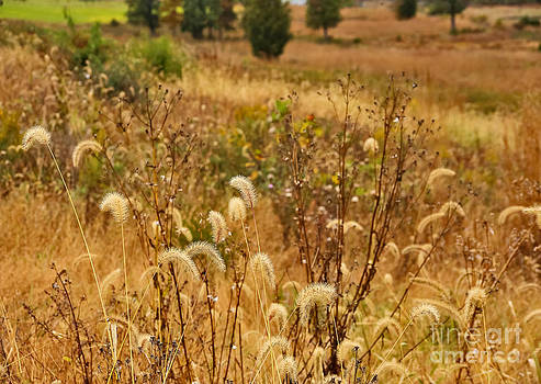 Tall Grass of Gettysburg by SCB Captures