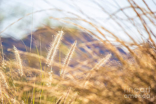 Alanna DPhoto - Tall Grasses in Warm Colors