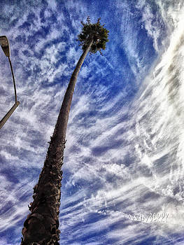 Tall Palm by Bob Winberry