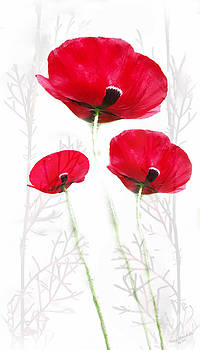 Tall Poppies by Wendy Slee