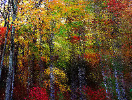 Tall Shades of Autumn by Dawn  Gagnon