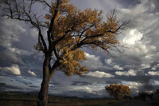 Sky and Tree by David Kehrli