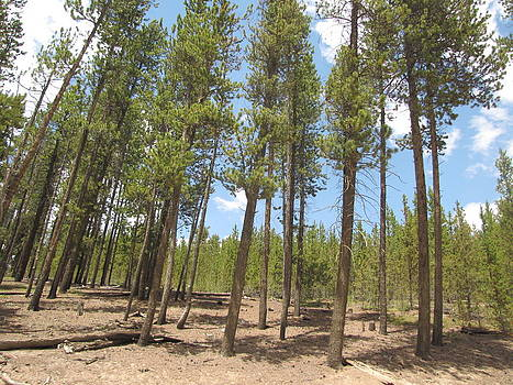 Tall Trees by Karma Gurung