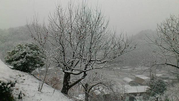 Tamba of winter C by Yoshikazu Yamaguchi