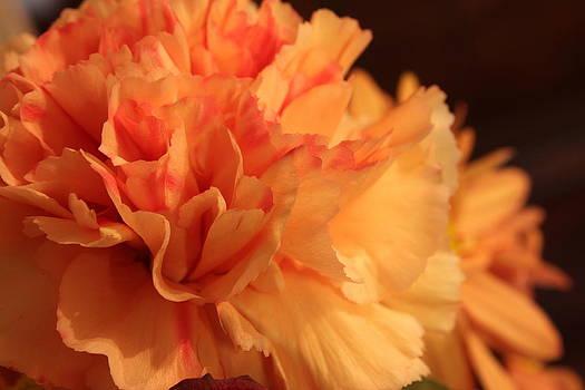 Carolyn Jacob - Tangerine Dreams