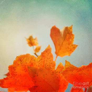 Tangerine Dreams by Sharon Coty