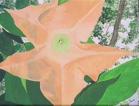 Tangerine Trumpet by Hilda and Jose Garrancho