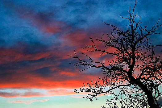 Tangled Wood Sunset by Kirk Strickland