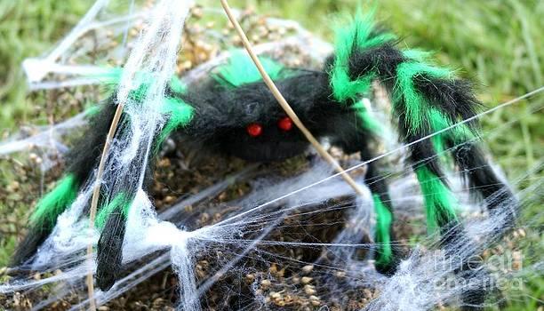 Gail Matthews - Tarantula in Web
