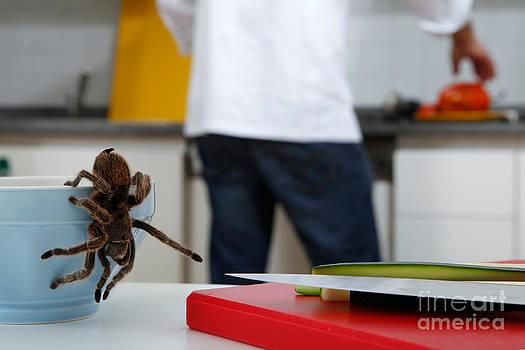 Emilio Scoti - Tarantula Trying To Escape