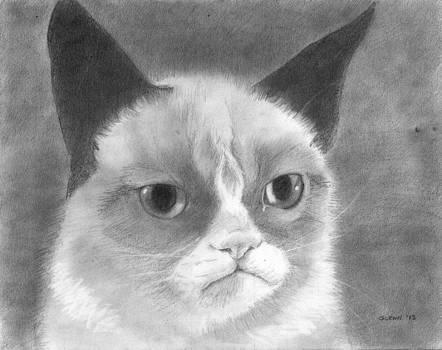 Tard the Grumpy Cat by Glenn Daniels