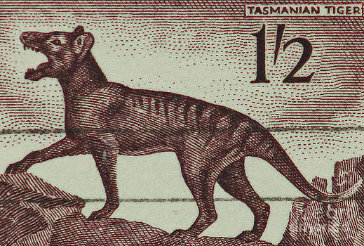 Tasmanian Tiger Vintage Postage Stamp by Andy Prendy
