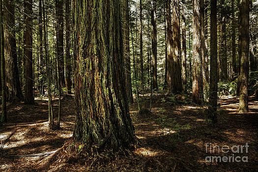 Tauranga Forest by Barbara Youngleson