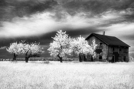 Tawas Barn by Jeff Holbrook