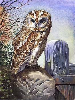 Anthony Forster - Tawny Owl