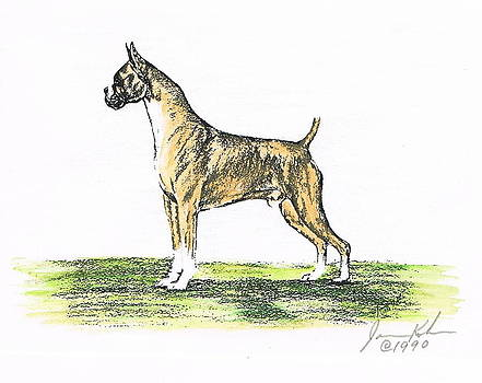 Tawny Boxer by Joann Renner