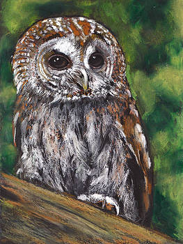 Joyce Geleynse - Tawny Owl in Pastel